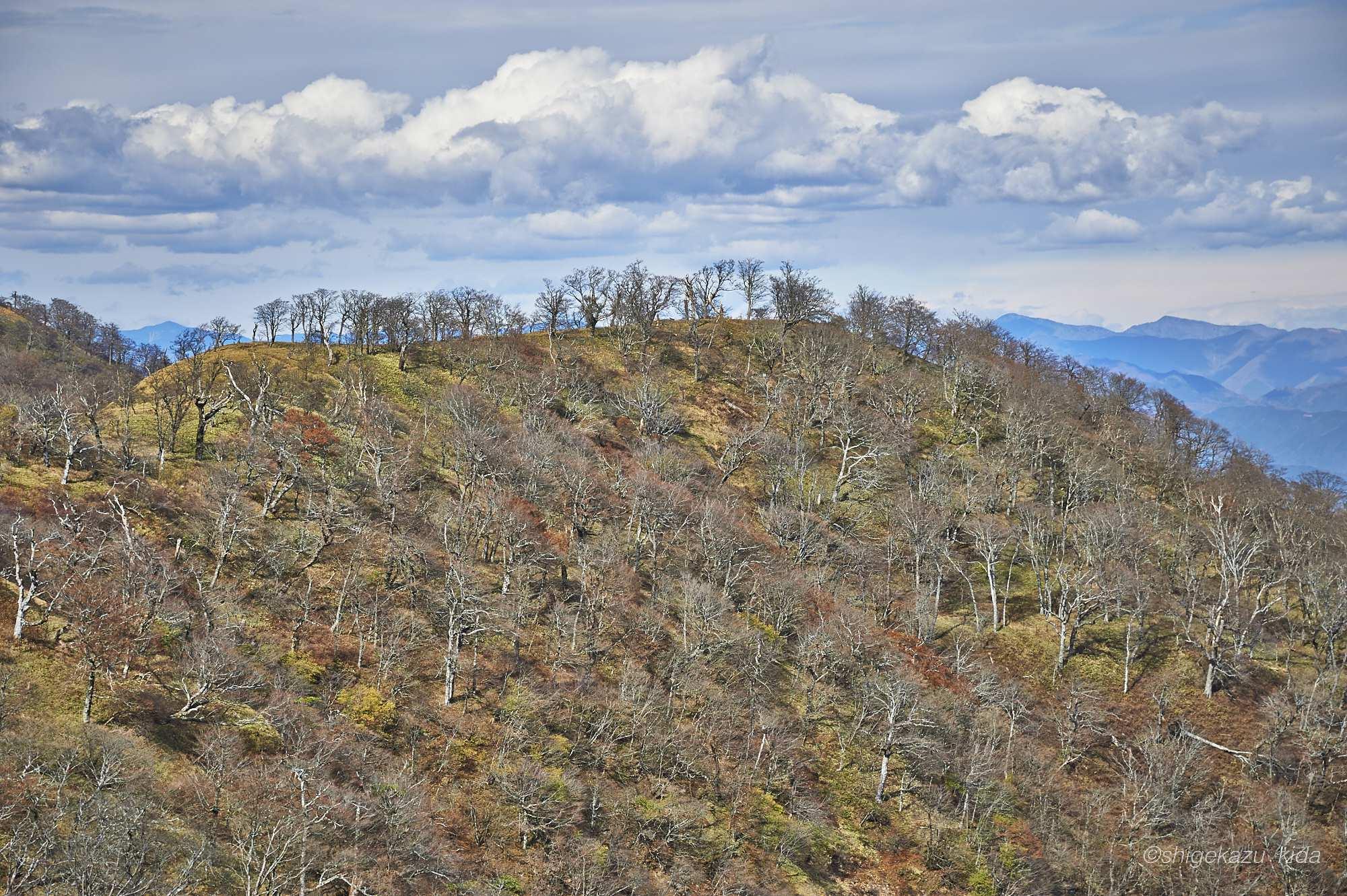 丹沢山の落葉樹