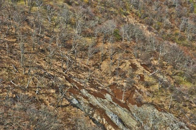 塔ノ岳から丹沢山の落葉樹