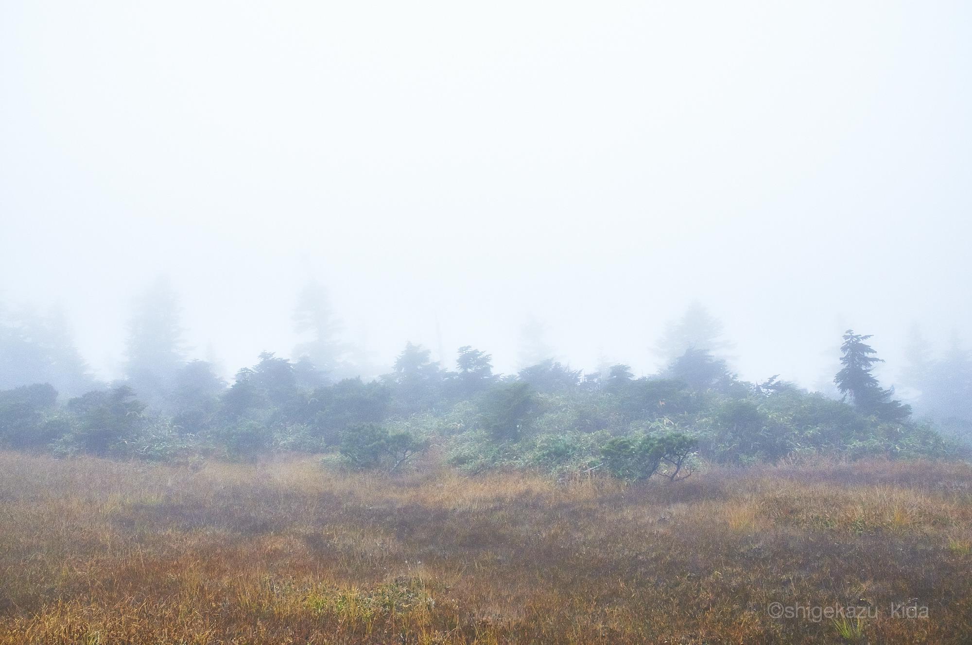 会津駒ヶ岳山頂の靄と森