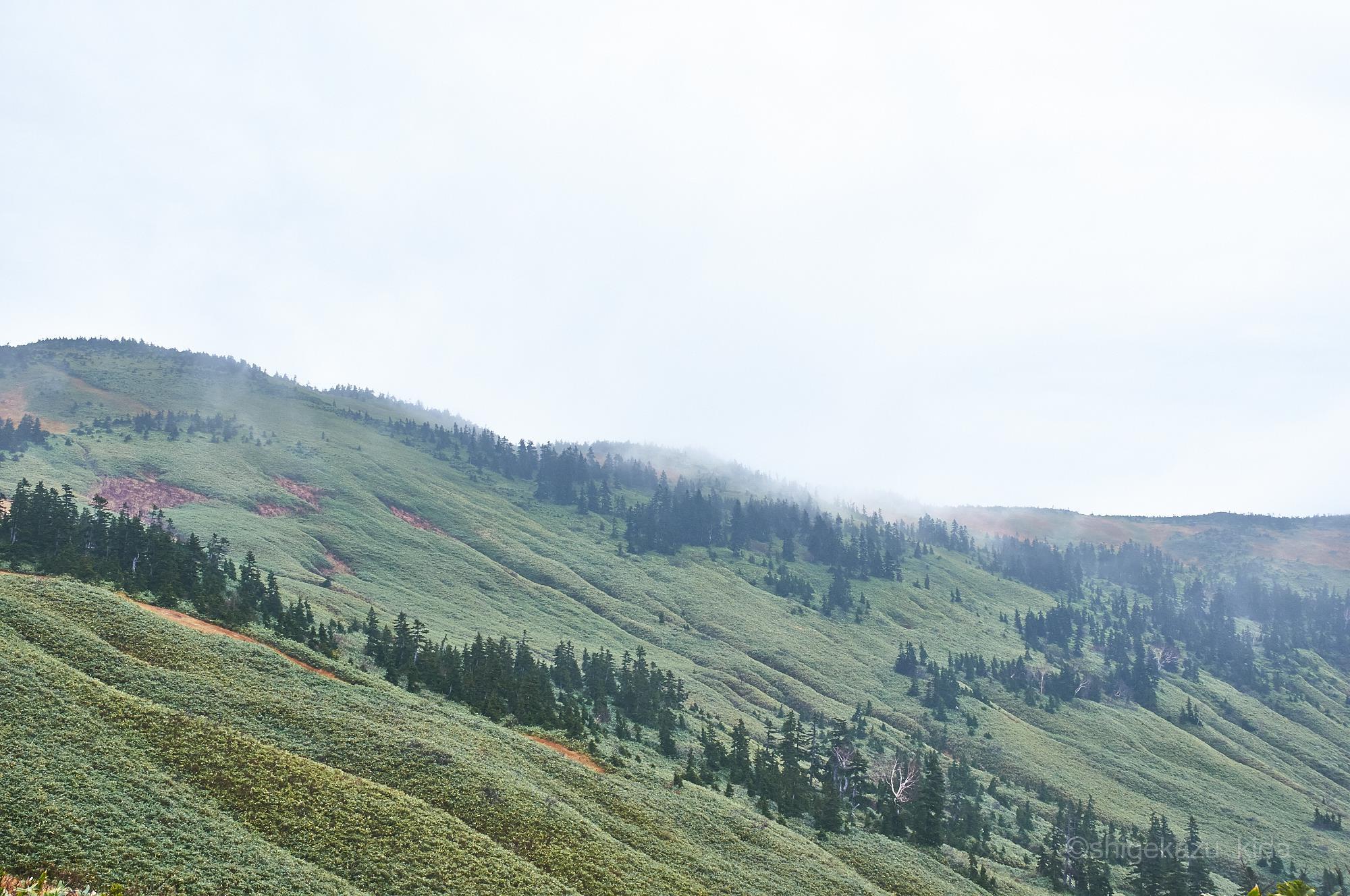会津駒ヶ岳の登山道から見る笹原の稜線