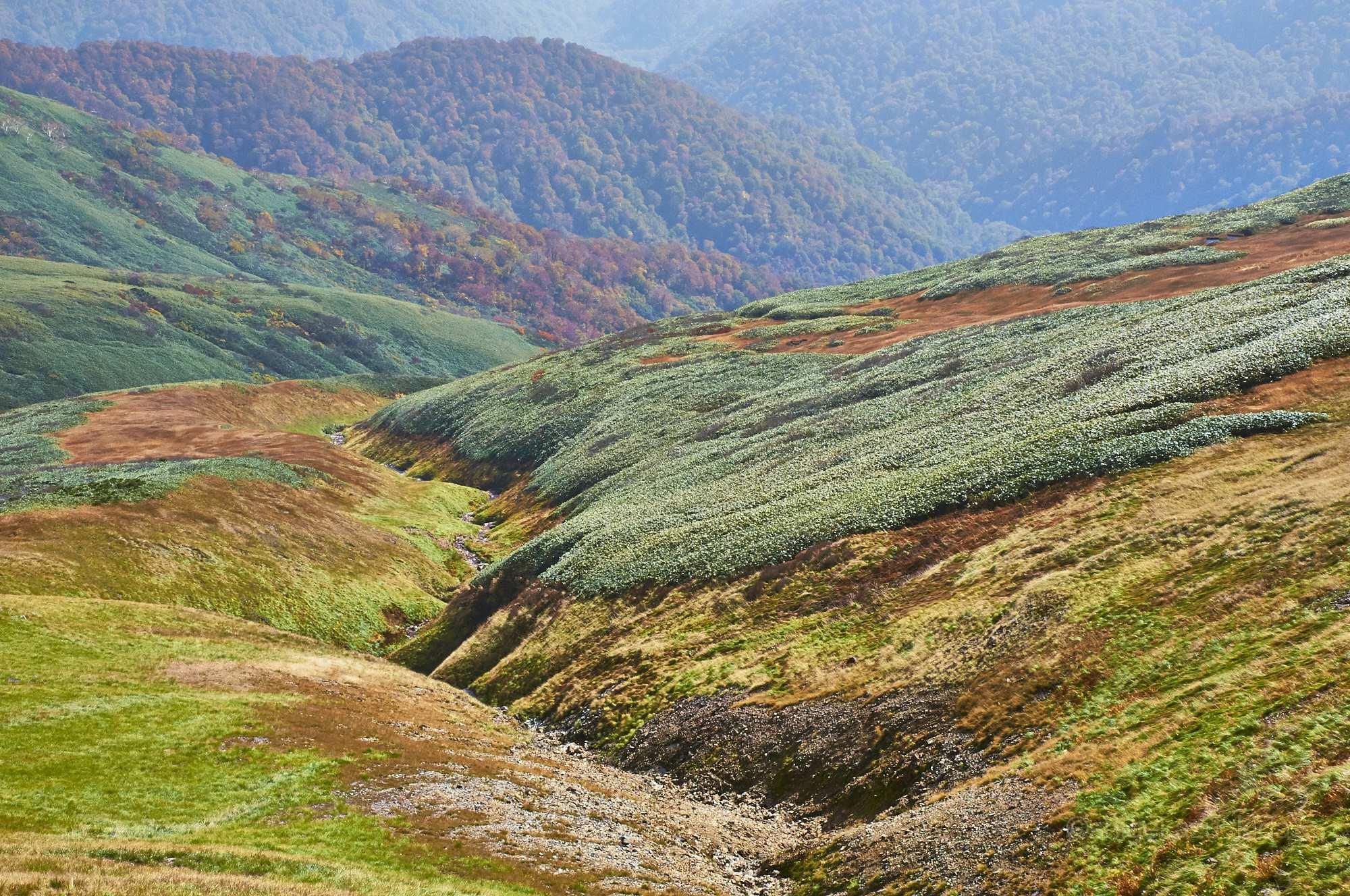 巻機山から見る稜線の紅葉
