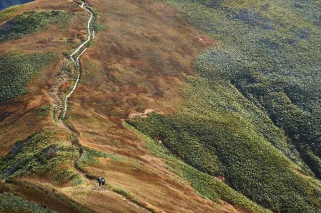 巻機山の登山道と笹原