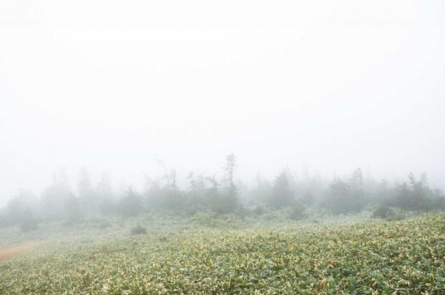 靄の平ヶ岳山頂の笹原