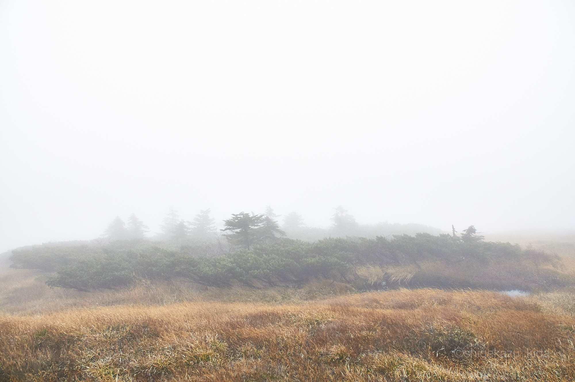 靄の平ヶ岳山頂のカヤト