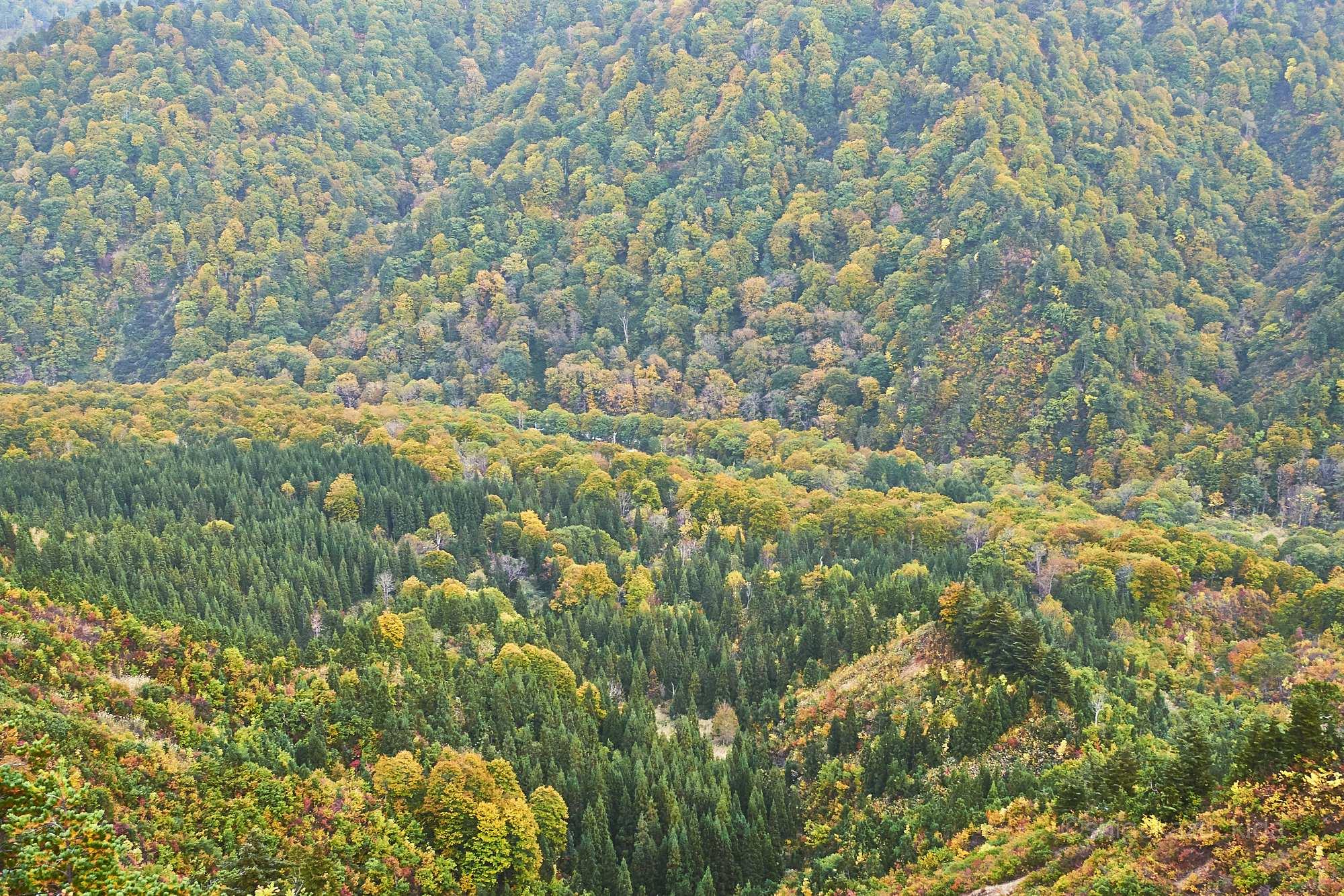 平ヶ岳の登山道から見下ろす森