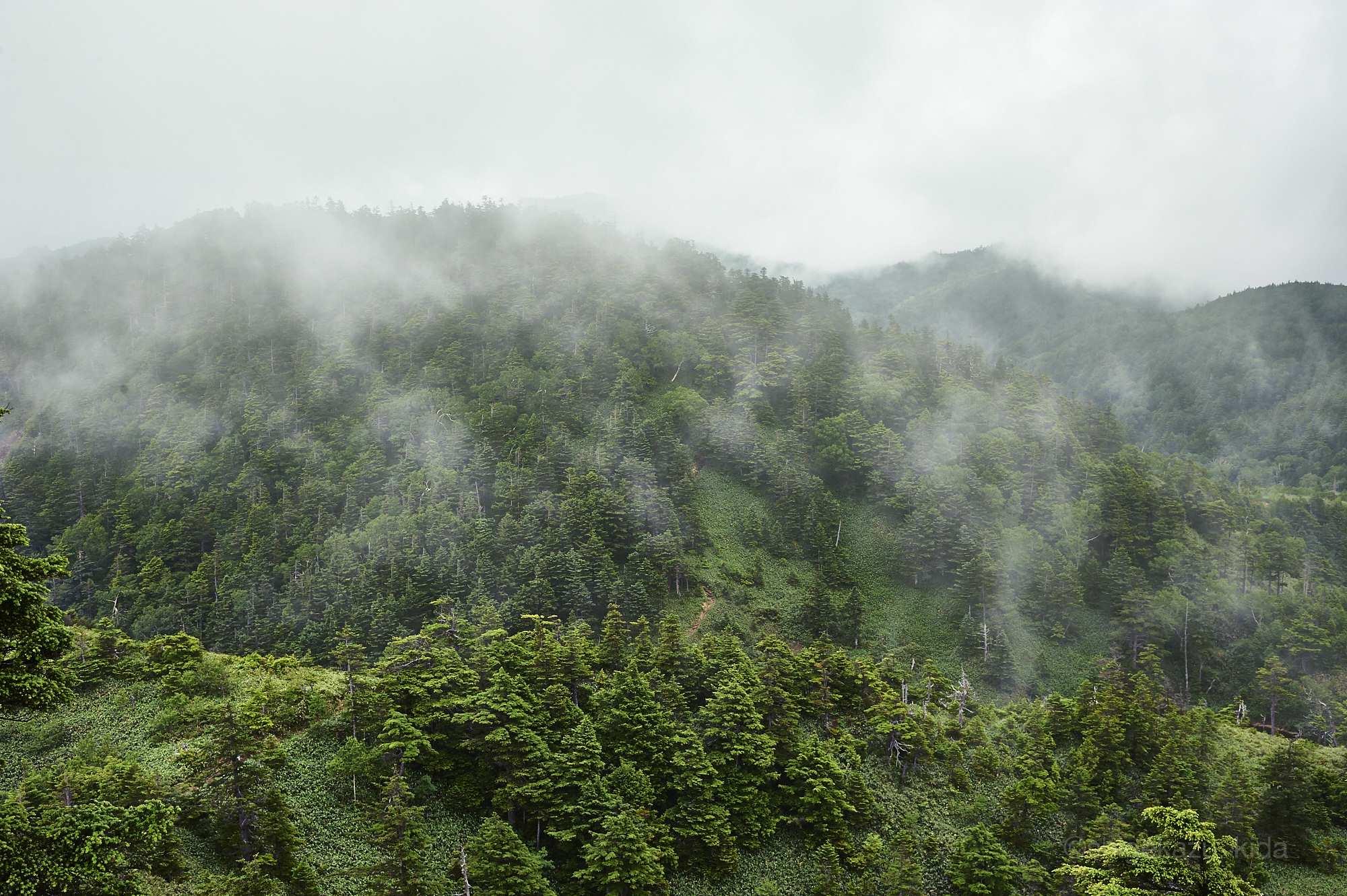 志賀山の森