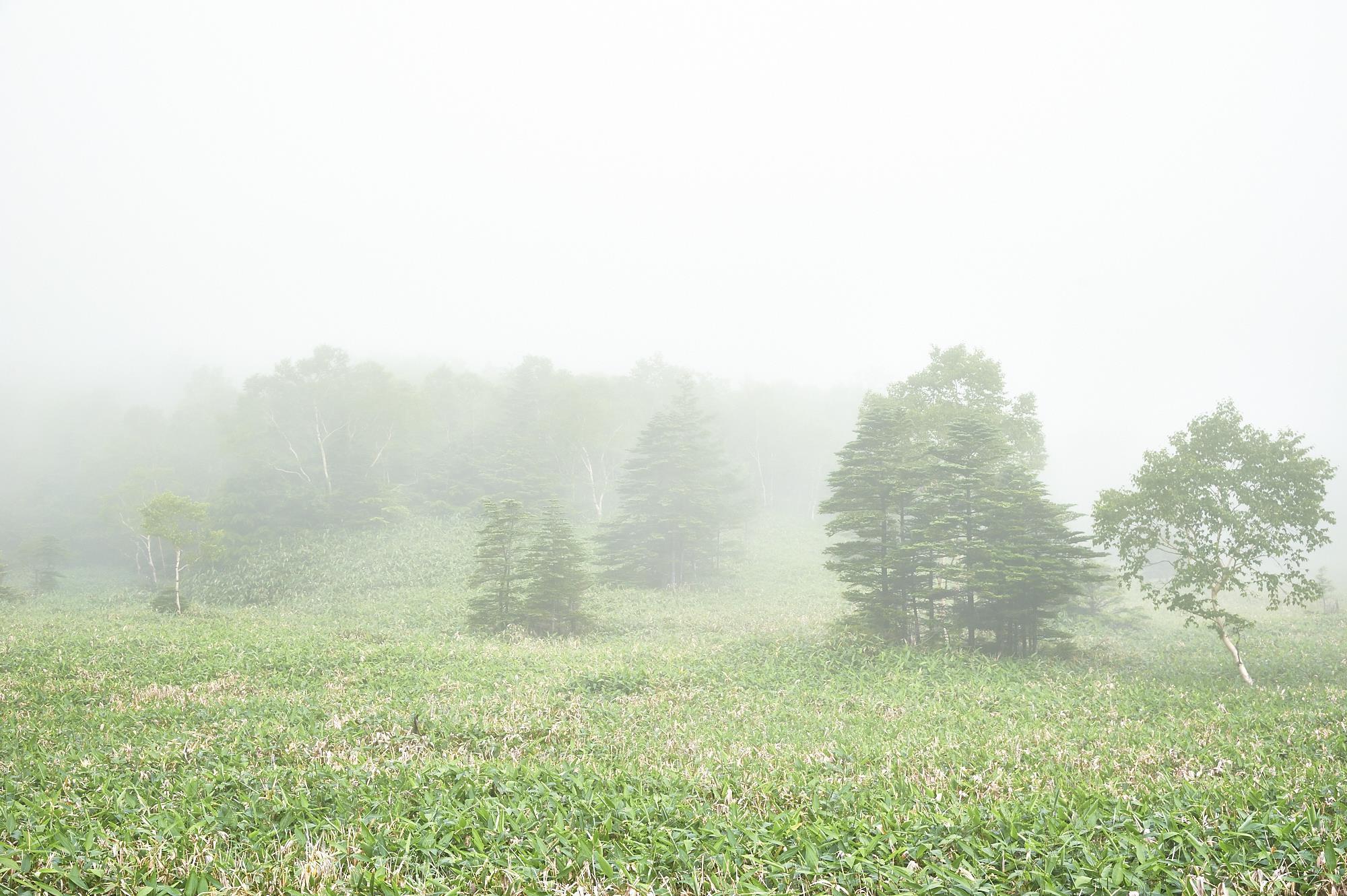 靄の本白根山の富貴原ノ池付近