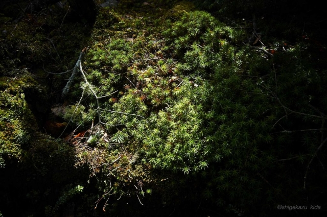 男体山の木漏れ日