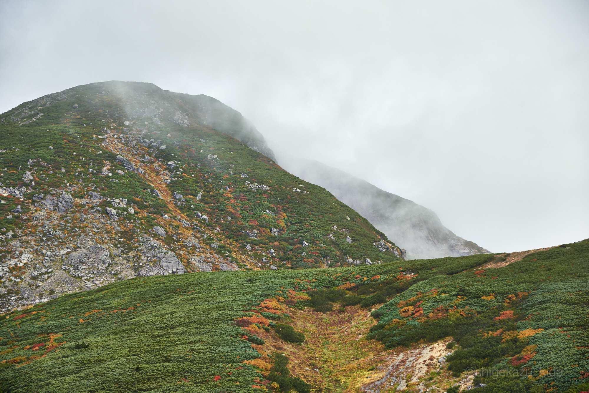 白山の紅葉の山肌