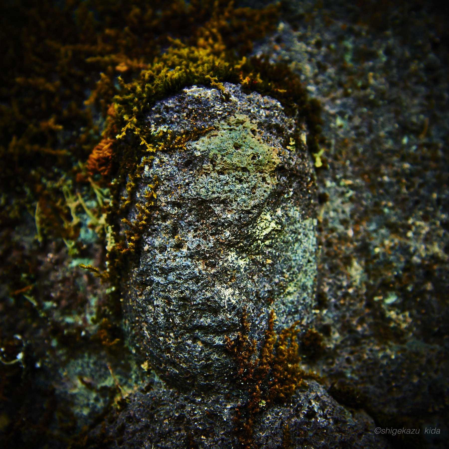 長野県松本市白骨温泉三十三観音の苔がまとわりついた石仏