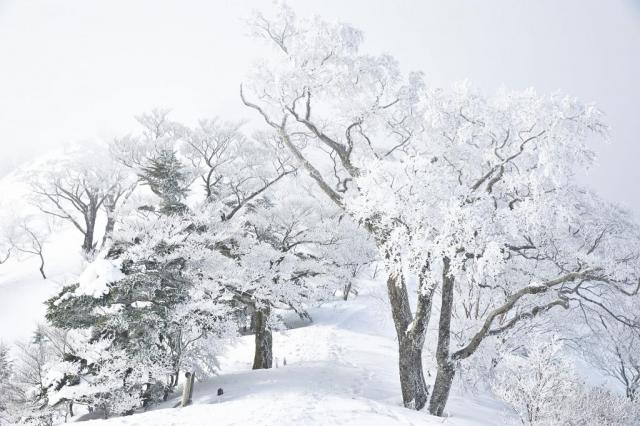 冬の雪山の石鎚山の樹氷