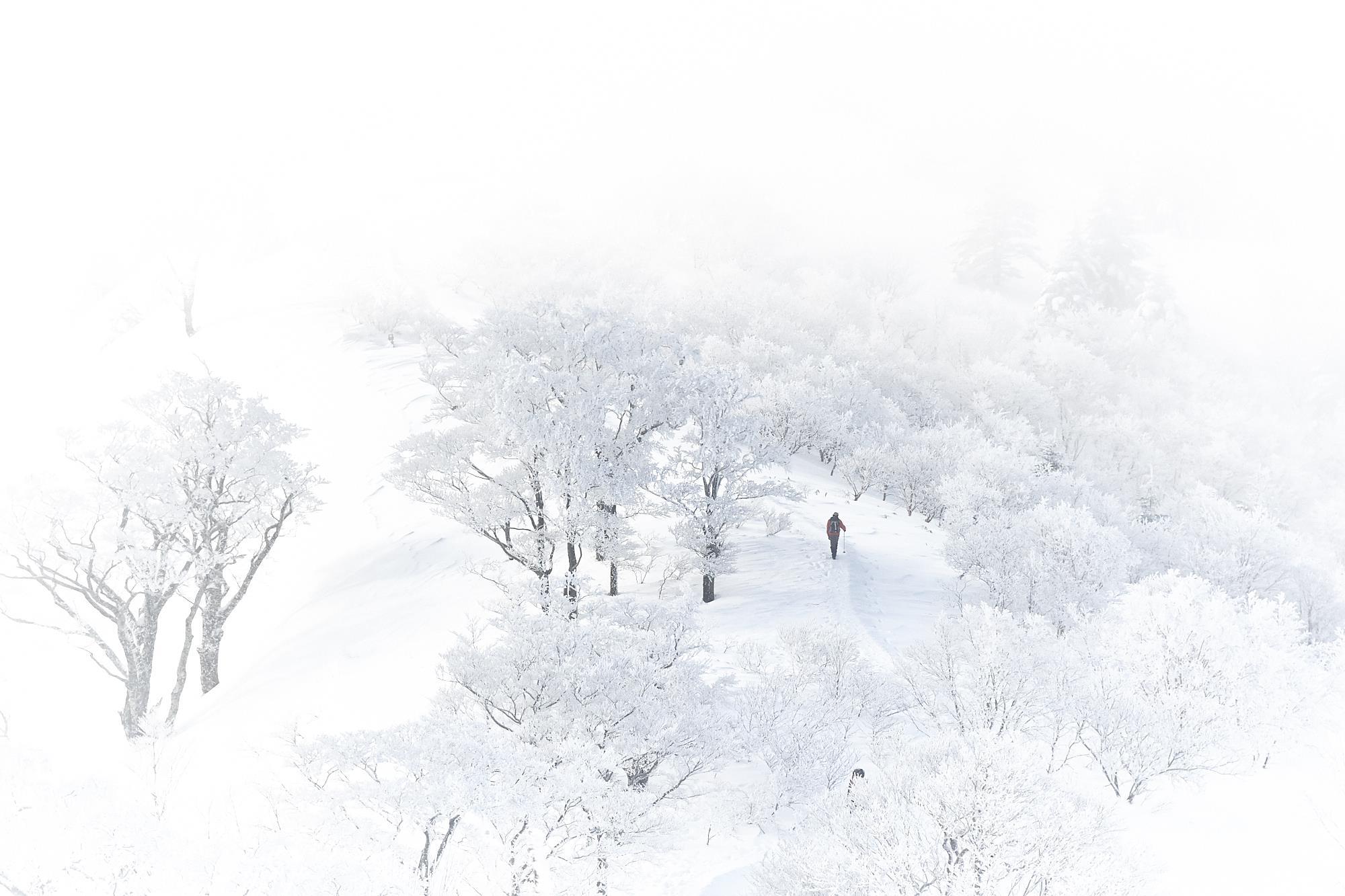 冬の雪山の石鎚山の登山道の霧氷