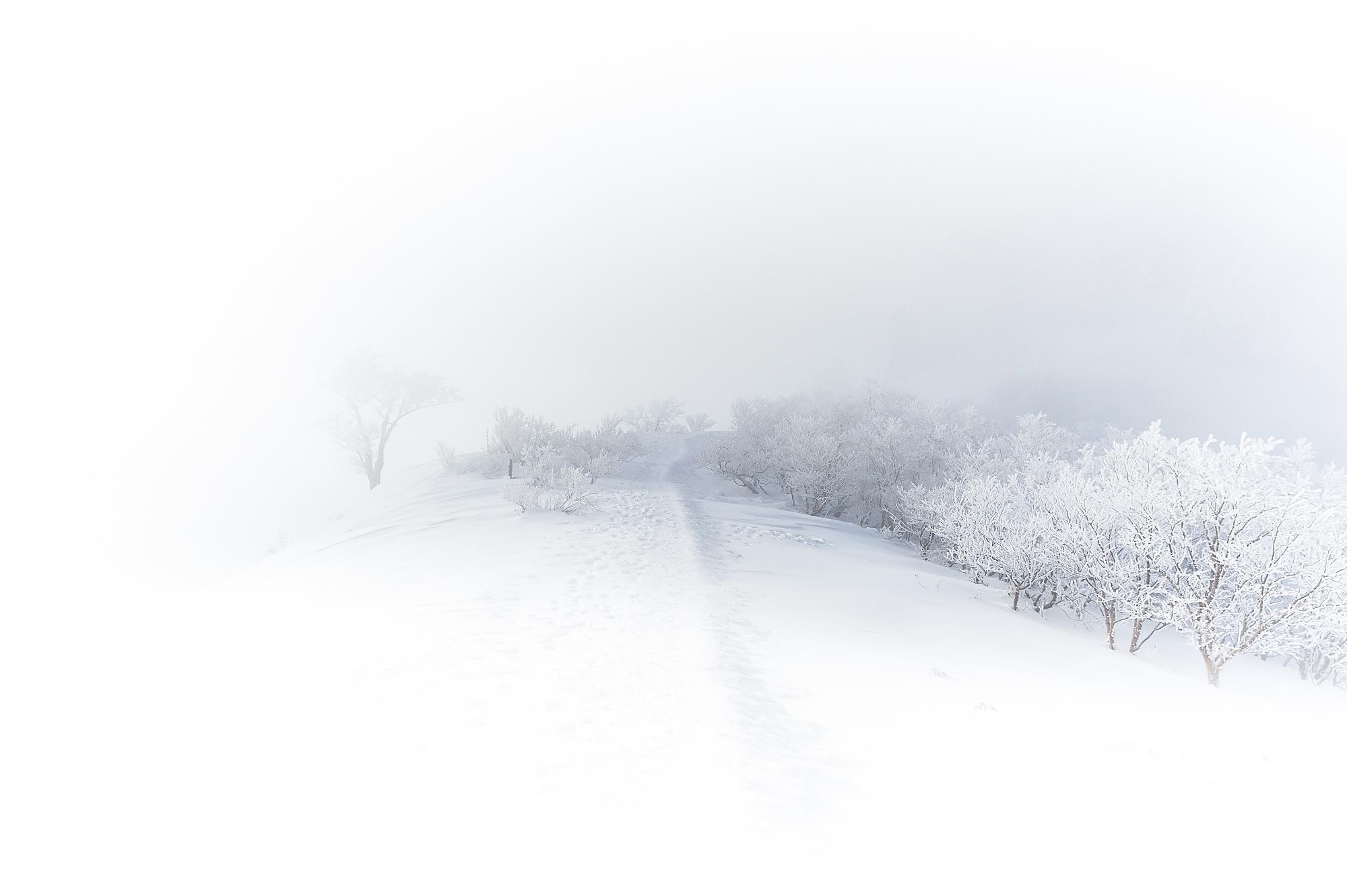 冬の雪山の石鎚山の霧氷