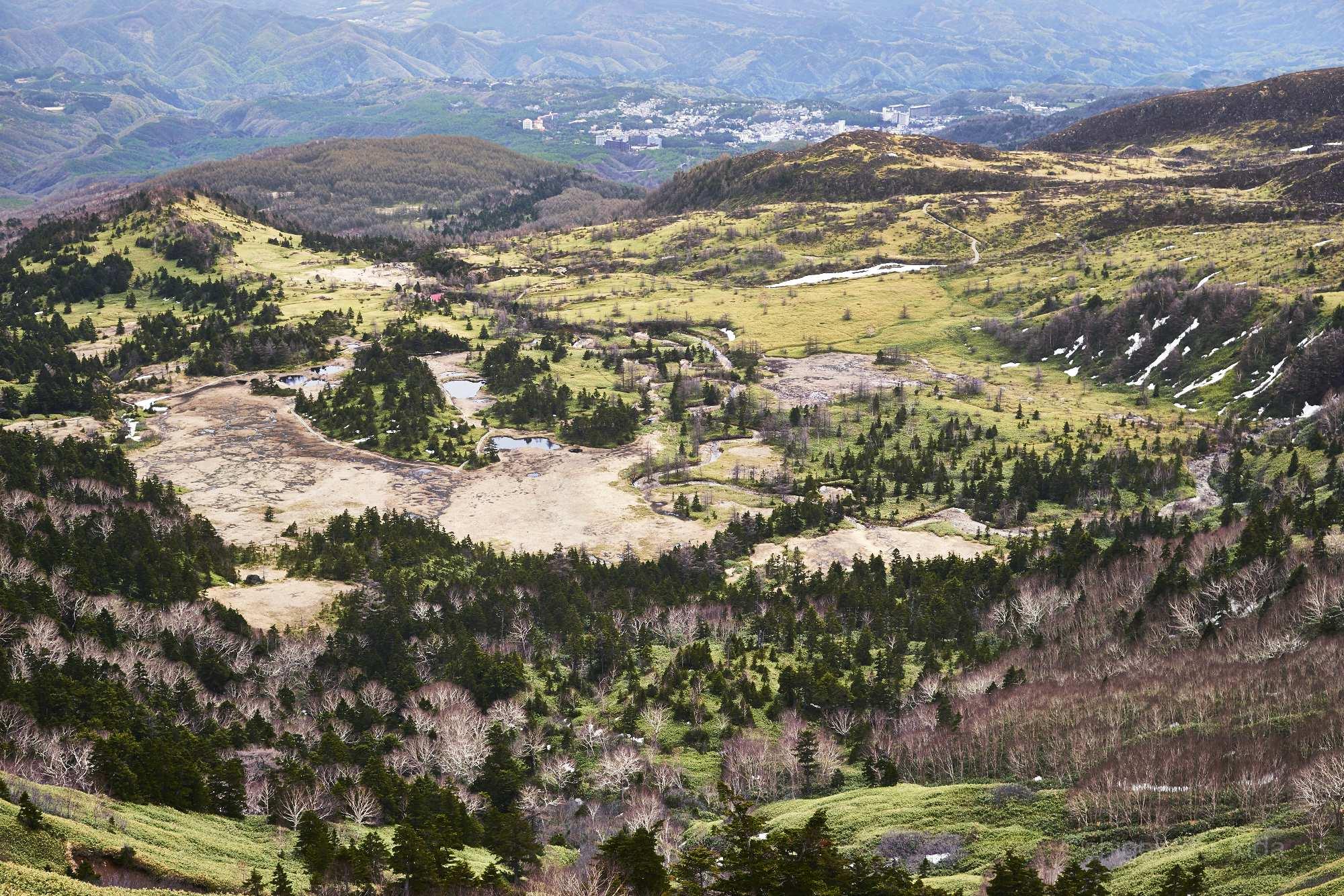 草津白根山の池塘と森