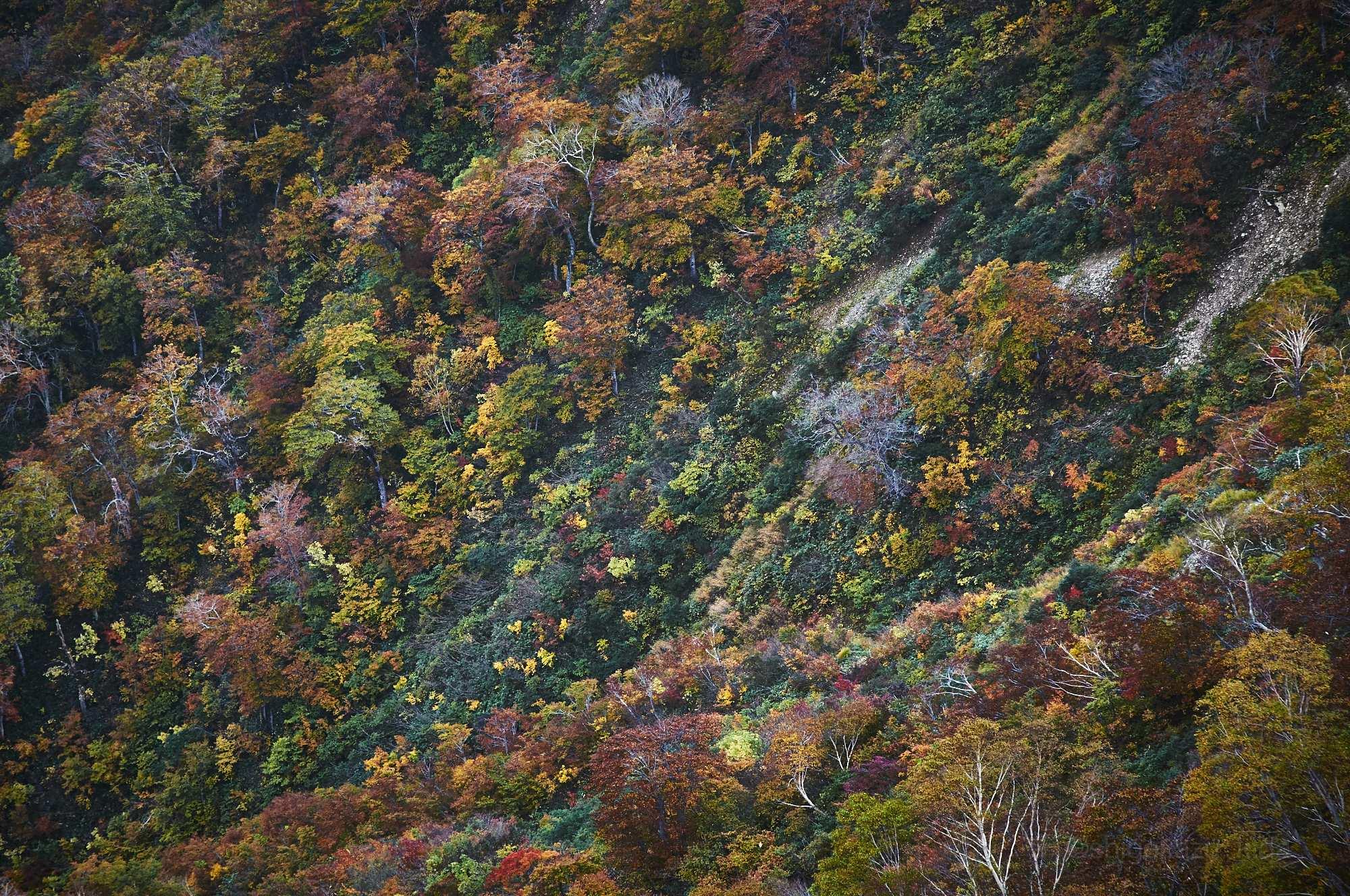 谷川岳の山肌の紅葉