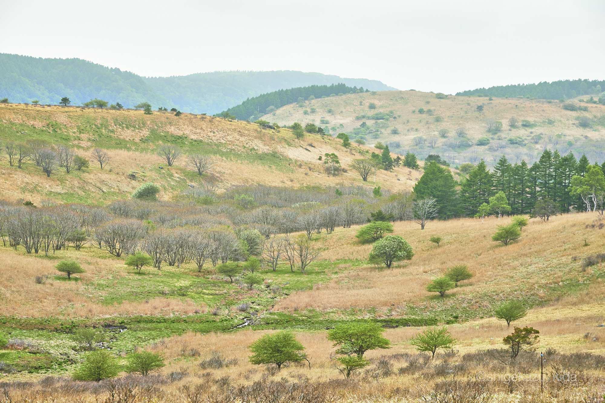 霧ヶ峰の草原
