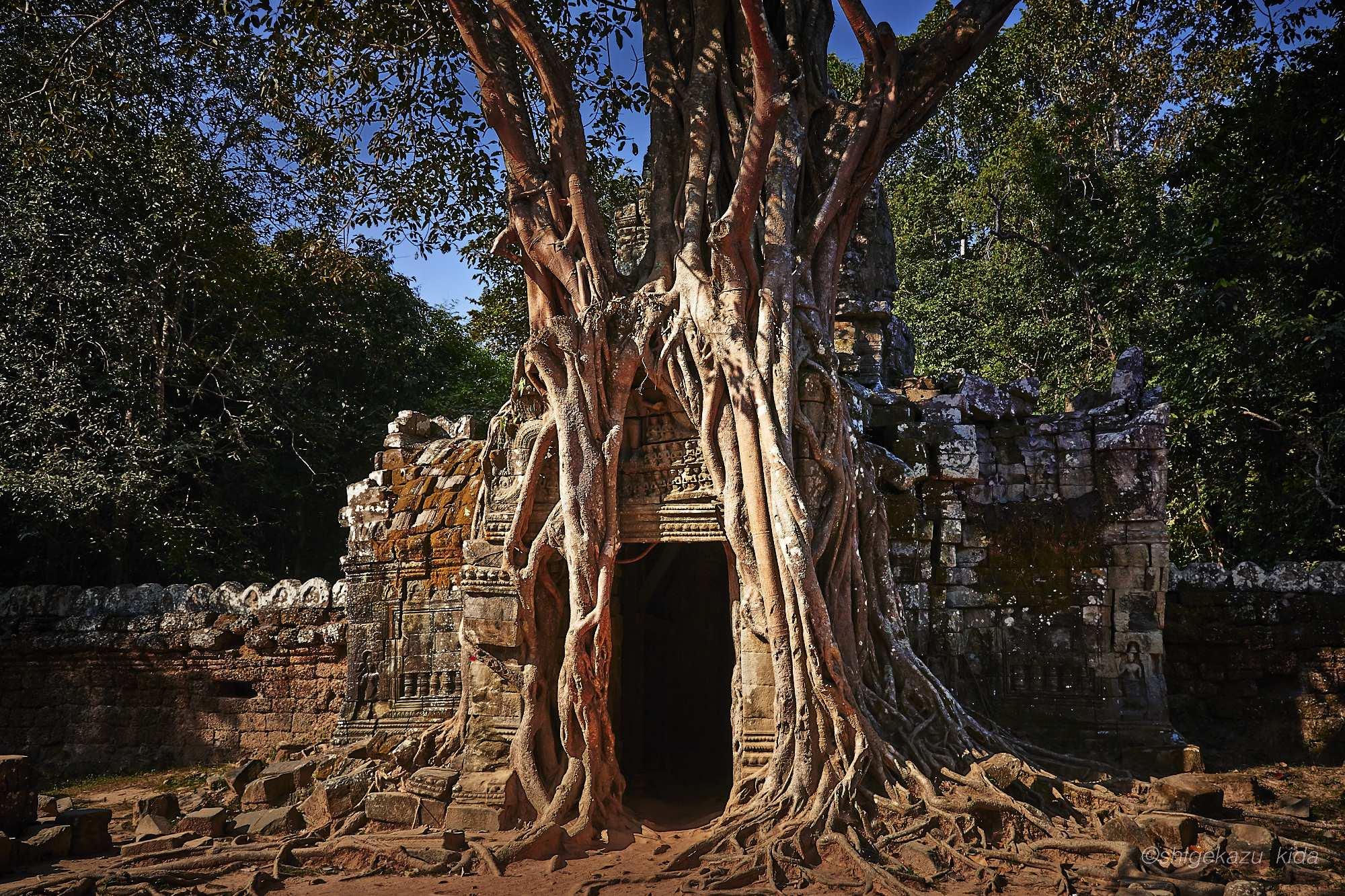 Angkor(アンコール)遺跡群にあるTaSom(タ・ソム)の東塔門にからみつくリエップの木の根